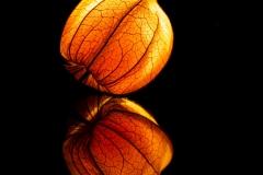 Leuchtende Physalis