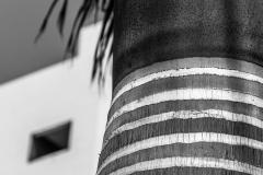 Palmtree I
